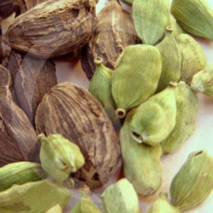 Fragrance Note Cardamom