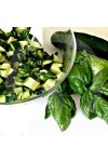 Basil & Cucumber Candle Fragrance Oil