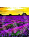 French Cade Lavender Fragrance Oil