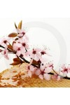 Hawaiian Honey Blossom Fragrance Oil