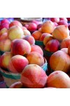 Peach Candle Fragrance Oil