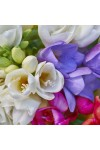 Freesia Candle Fragrance Oil