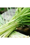 Wild Lemongrass Fragrance Oil