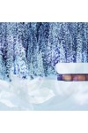 Winter Night's Dream Candle Fragrance Oil