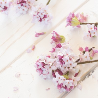 Daphne Candle Fragrance Oil