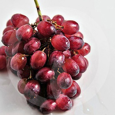 Amazonian Grape Fragrance Oil