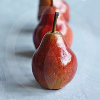 Anjou Pear Candle Fragrance Oil