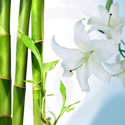 Bamboo & White Lily Candle Fragrance Oil