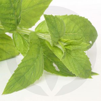 Peppermint and Eucalyptus Fragrance Oil